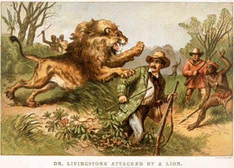 Livi lion