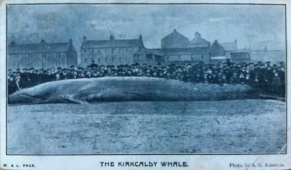 Whalejpeg