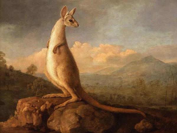 Stubbs-kangaroo