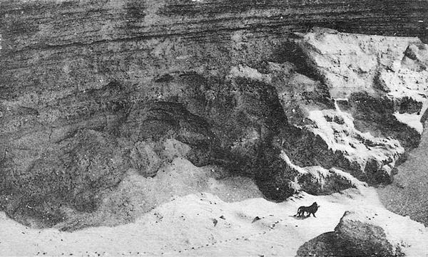 1925lion
